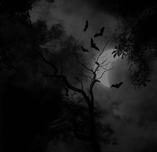 Anime Girl Wallpaper White In The Middle Too Scary Photography Illustration Art Tree Bat Black And