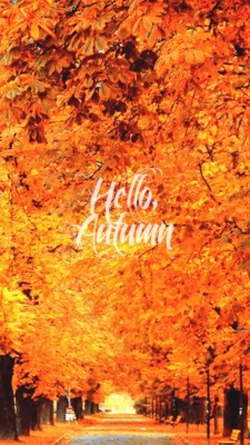 The Thing Iphone Wallpaper Iphone Orange Fall Nature Autumn Warm Seasons Cozy Leaves