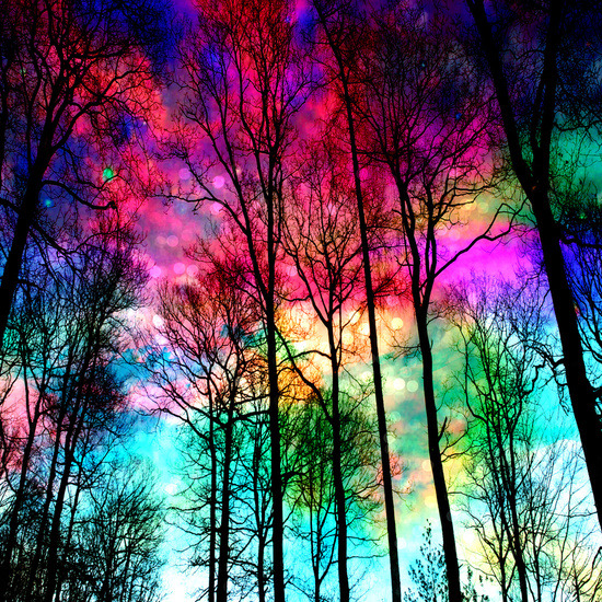 Photography Art Tree Hippie Sky Hipster Design Landscape