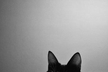 horizontal aesthetic cat walls cute walpaper frame hipster
