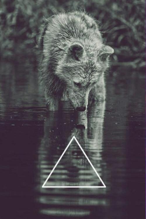 tumblr wolf hipster vintage indie galaxy animal wallpaper ...