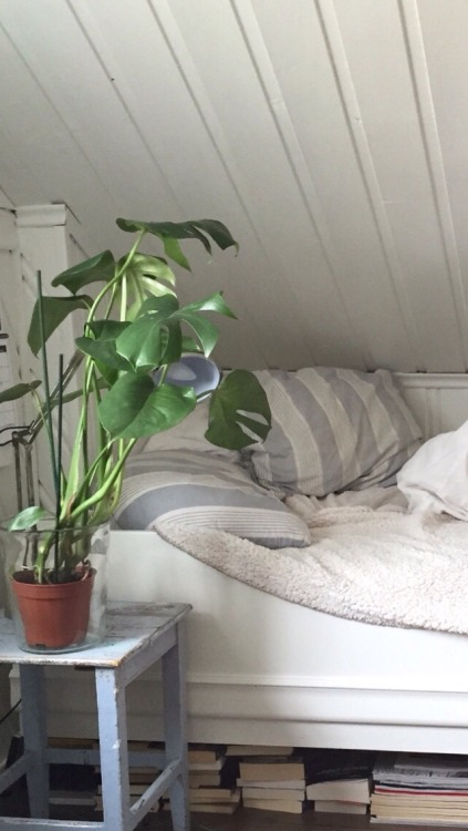 Bedroom Plants Tumblr