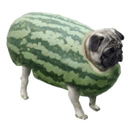 pug pugs transparent funny cute dogs animals costumes puppies costume loading