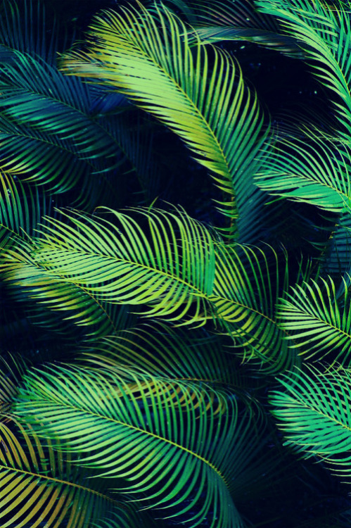 palm leaves on Tumblr