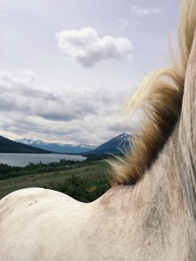Häst Tillbaka