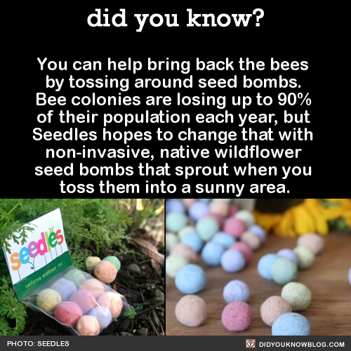 You can help bring back the bees  by tossing around seed bombs.  Bee colonies are losing up to 90%  of their population each year, but  Seedles hopes to change that with  non-invasive, native wildflower  seed bombs that sprout when you  toss them into a sunny area.  Source Source 2