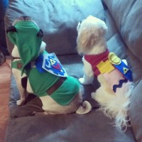 Halloween zelda link pug legend of zelda princess zelda ...