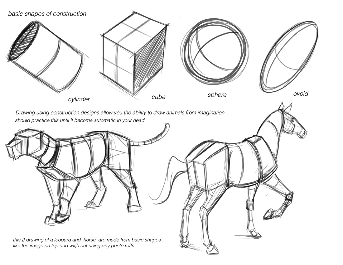 drawing animals tutorials art reference how to draw Animal