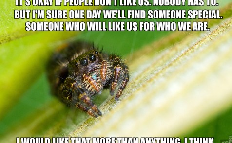 Image of cute jumping spider on grass, with text: