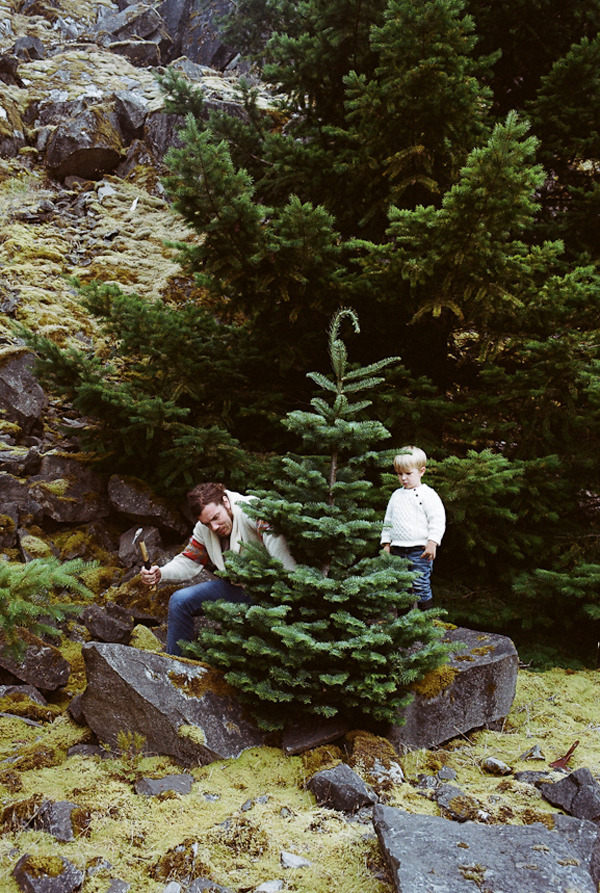 On Gingerbread Terrariums, Christmas Wreaths and Robert ...