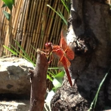 dragonfly visitor
