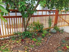 front fence north