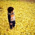 銀杏の黄色い絨毯