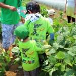 枝豆収穫体験
