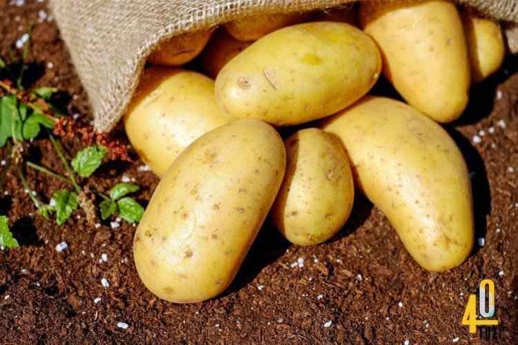 Kartoffeln – Nährstoffe und Kalorien