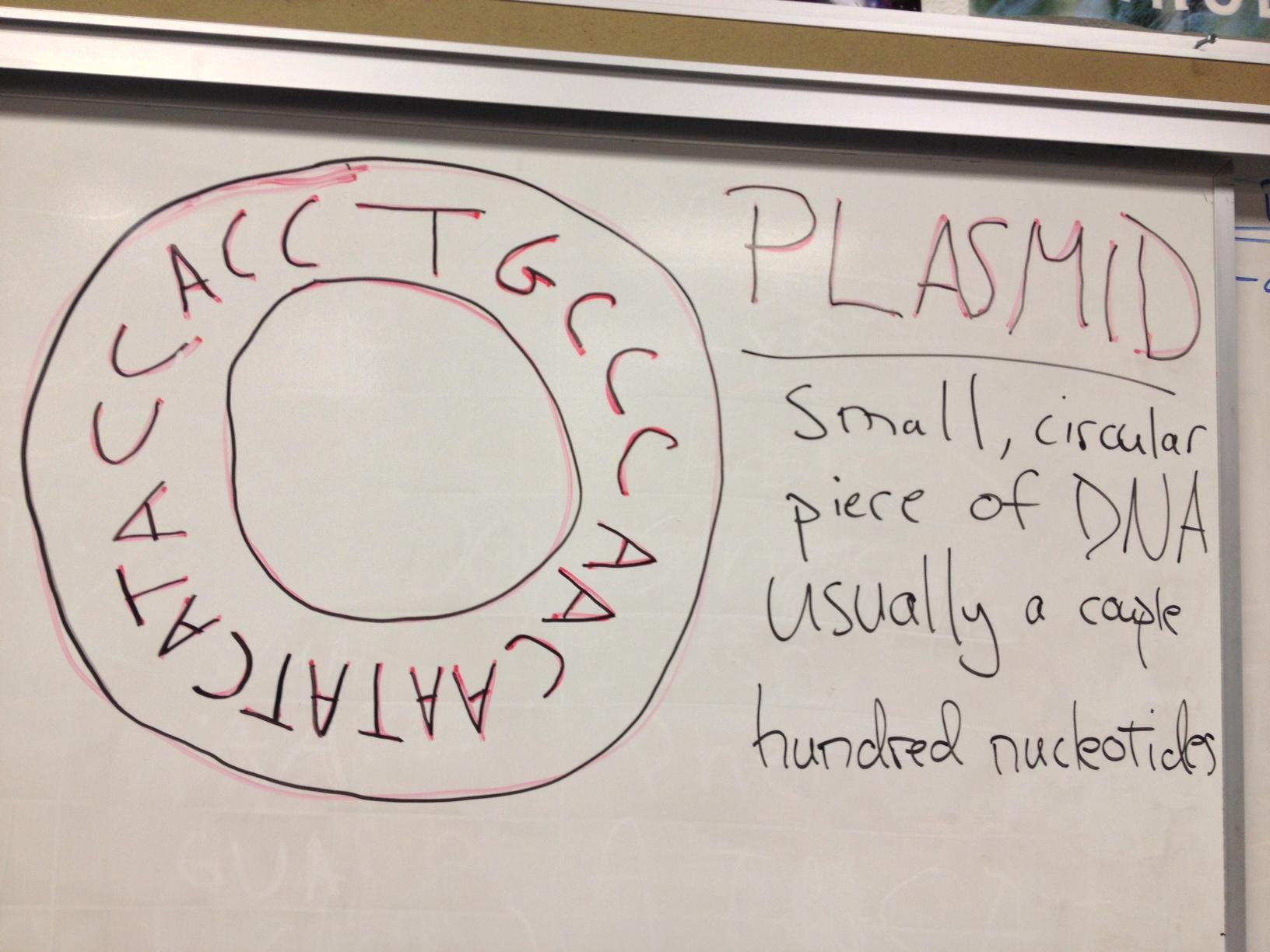 Biology Hw