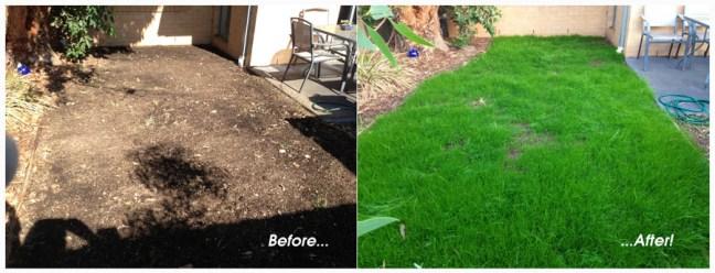 My back lawn