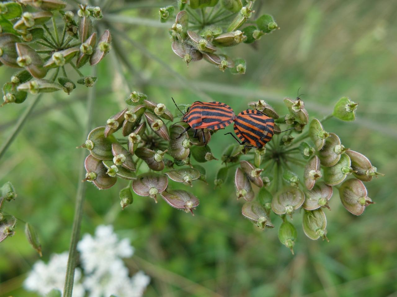 mangia minga // 'Wildkräuter: Foraging Wild Herbs'