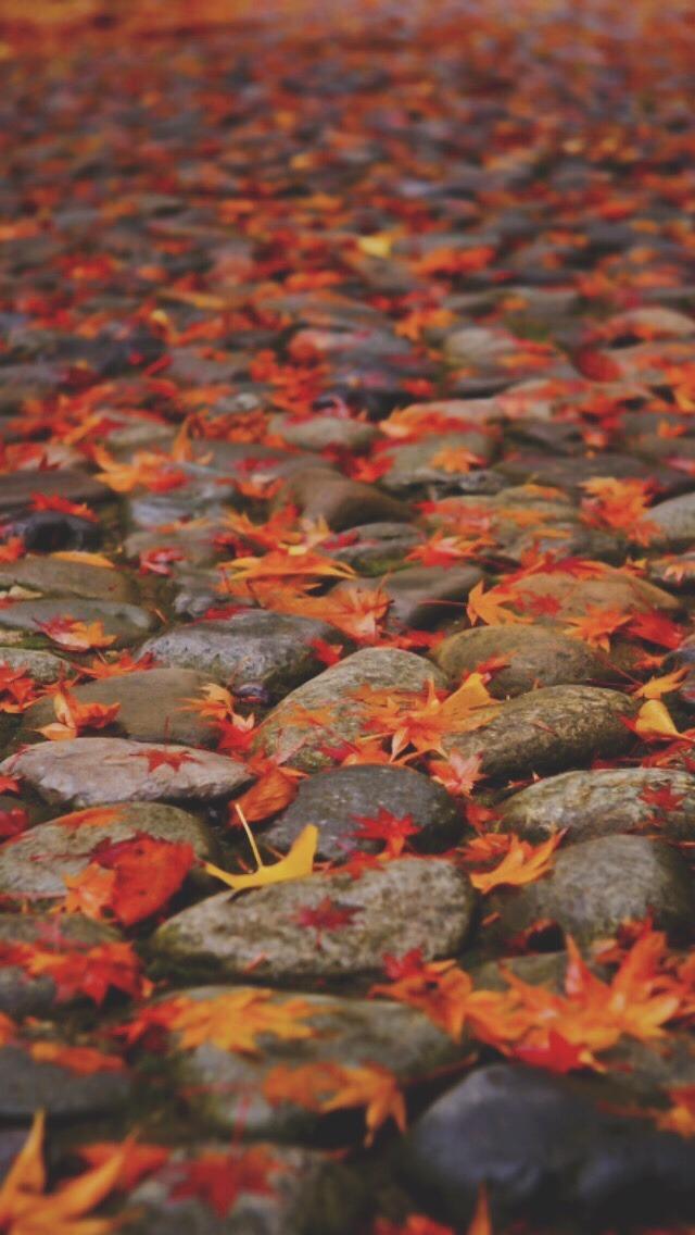 Fall Leaves Fox Wallpaper Fall Autumn Fox Foxes Leaves Autumn Wallpaper Fall