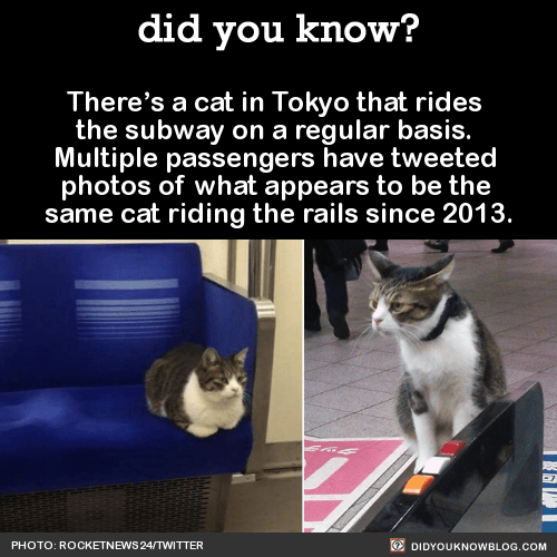 There's a cat in Tokyo that rides  the subway on a regular basis.  Multiple passengers have tweeted  photos of what appears to be the  same cat riding the rails since 2013.  Source