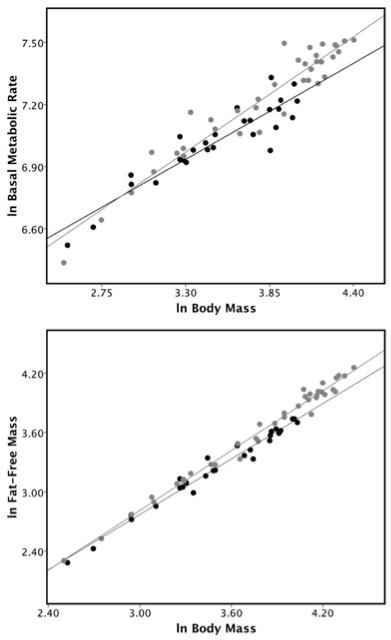 Ontogenetic Scaling of the Human Nose in a...