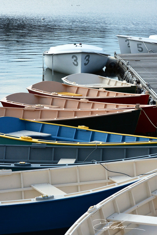 Rowboats by david fuller Via Flickr: Jamaica Pond