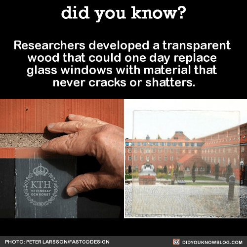 Researchers developed a transparent  wood that could one day replace  glass windows with material that  never cracks or shatters.  Source Source 2