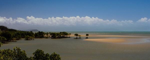 mangrove beach near Port Douglas