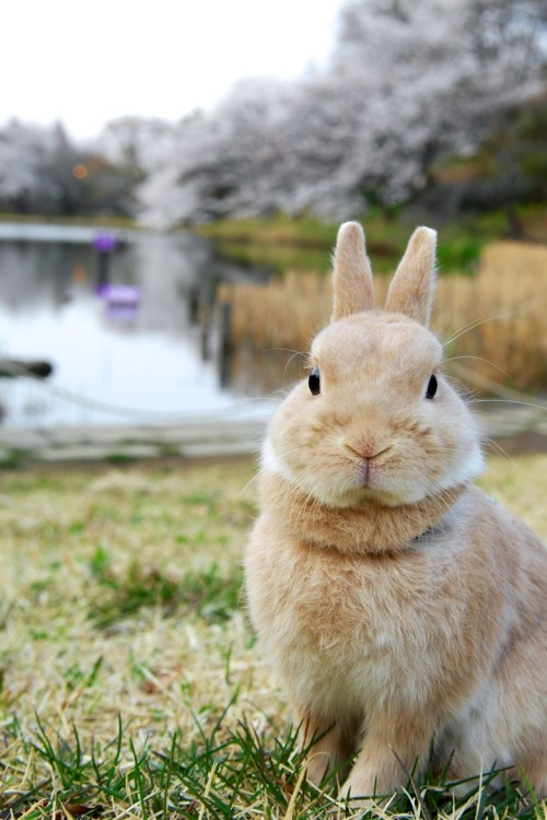 llbwwb:</p> <p>For the bunny lovers:) Rabbit by Yuki Matsukura<br />