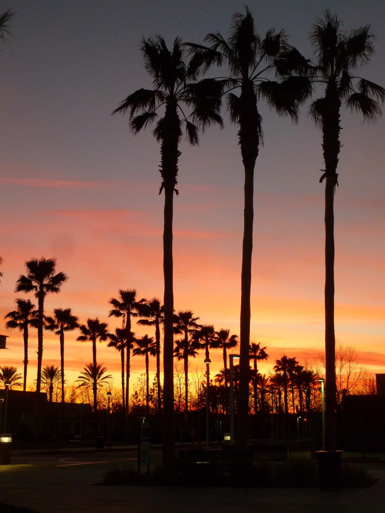 palm trees sunset tumblr. palm trees sunset tumblr