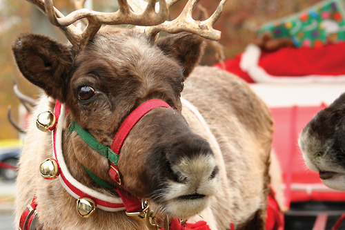 OH MY GOD I DIDNT KNOW HOW CUTE REINDEER ARE😍☺️