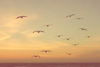 gulls over the beach