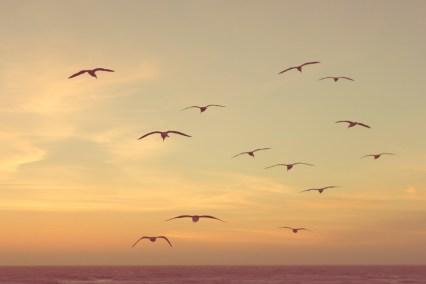 gulls over the beach