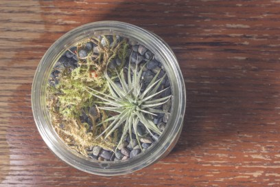 wide-mouth mason jar terrarium