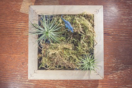 dinosaur pen with picture frame and airplants