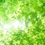 新緑が眩しい季節