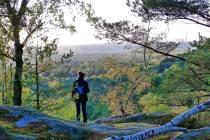Vers le site de Fontainebleau Tourisme