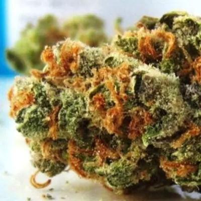 Yumberry Marijuana Strain Review
