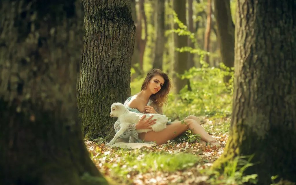 Sour Lamb Review – Sweet Sativa