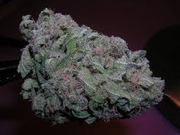 Buy purple kush online-purple kush for sale-medical marijuana dispensary nyc