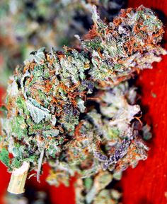 Buy trainwreck weed online-trainwreck for sale
