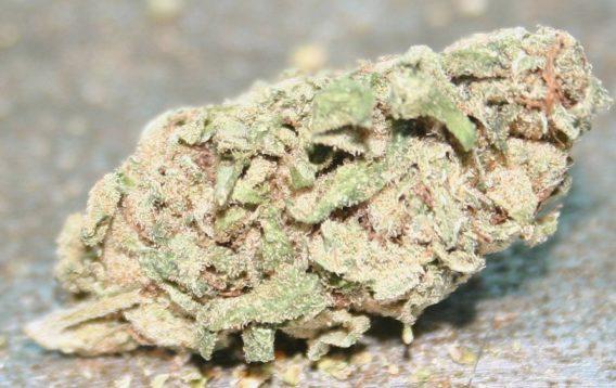 Buy white widow weed online-white widow for sale-medical marijuana dispensary near me