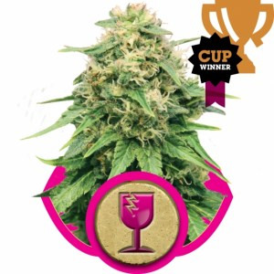 The Vault Critical Fem seeds deal