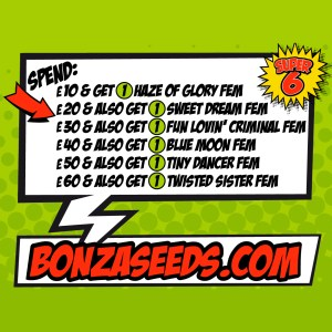 Super Six Bonza Seeds Sale