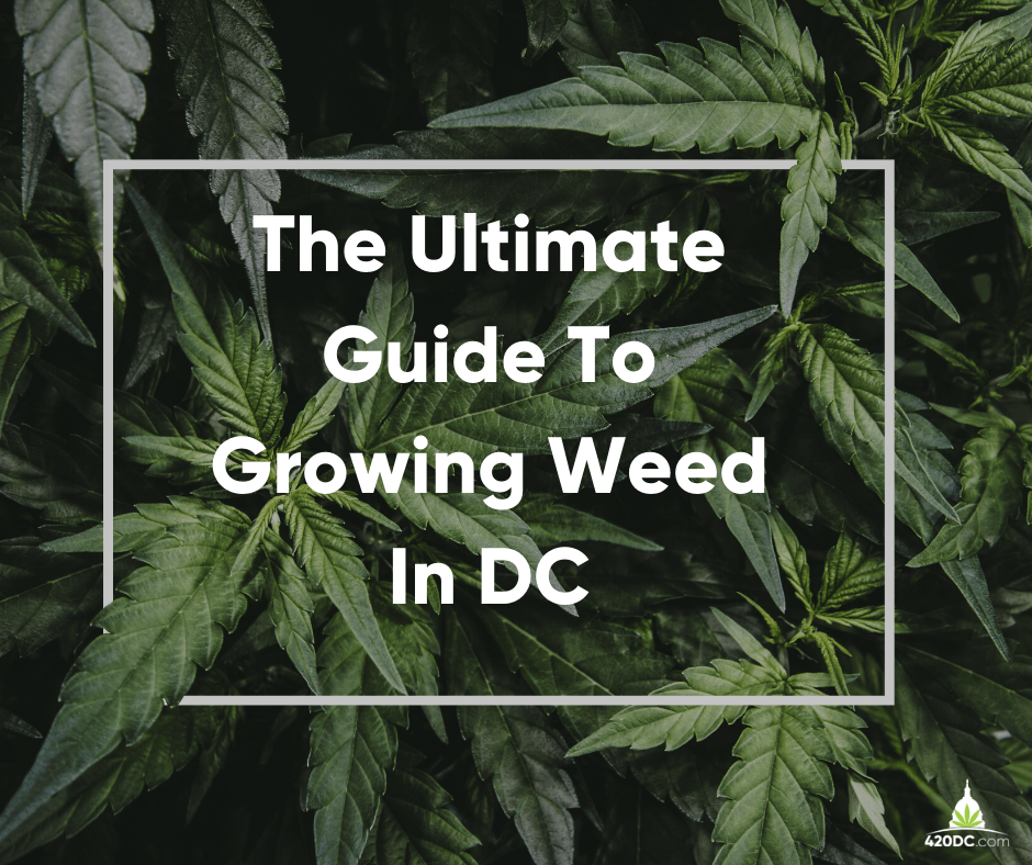 growing weed in dc