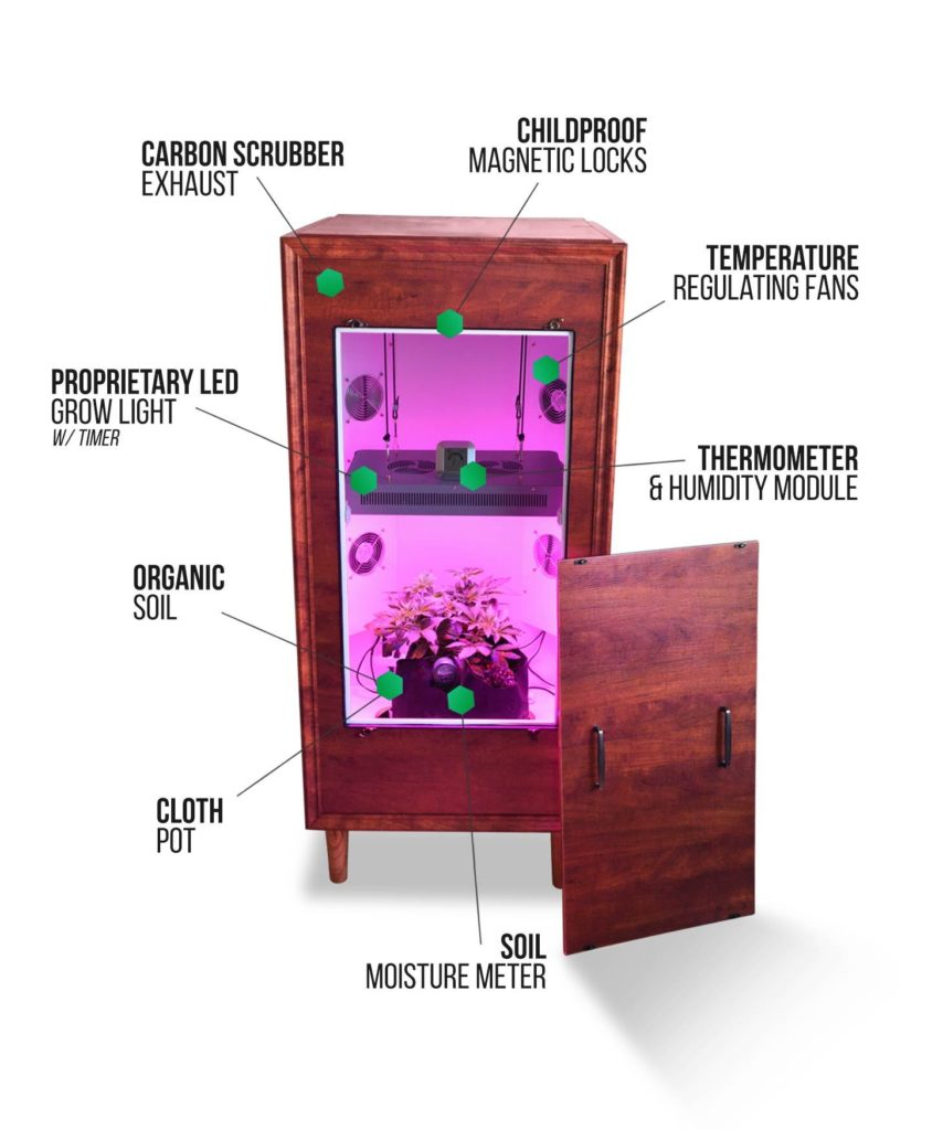 the armoire weed grow