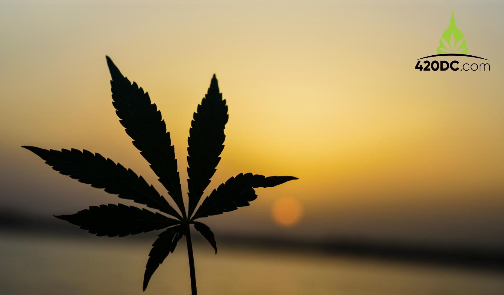 Weed, Cannabis in South Carolina