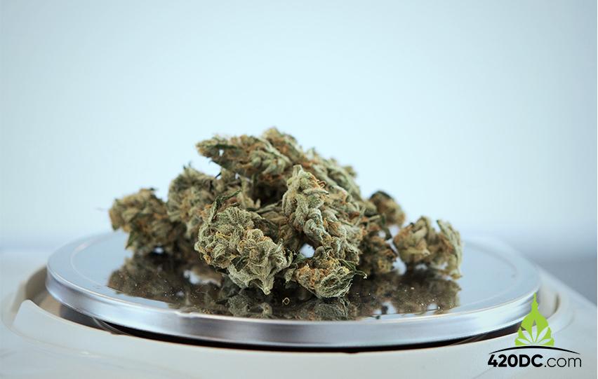 Weed in North Carolina, Cannabis, Marijuana