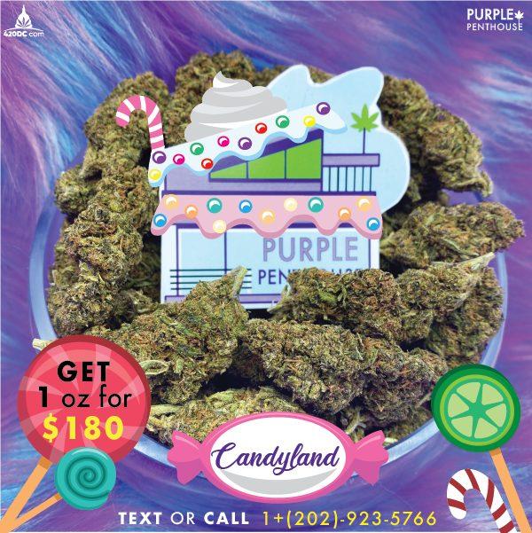 Introducing: Purple Penthouse 3 2020