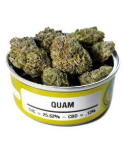 quam, quam for sale, quam space monkey meds, quam space monkey strain, quam strain, quam strain for sale, quam strain for sale France, quam strain for sale Germany, quam strain for sale UK, quam weed, Buy quam marijuana strain, Buy quam online, Buy quam Space Monkey Meds Online, Buy quam strain Australia, buy quam strain online, Buy quam strain UK, Get you best quam strain online, order quam strain Australia, Order quam strain online, order quam strain UK, Purchase original quam online, space monkey, space monkey quam strain, space monkey meds, space monkey strain, the quam strain, Where to Buy quam Space Monkey Meds, where to buy quam strain